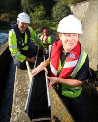 Fitting the eel pass on the River Cuckmere weir