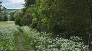 Countryside generic