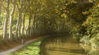 Plane trees, canal du Midi