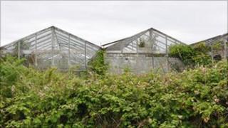 Derelict greenhouses