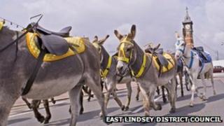 Donkeys in Skegness