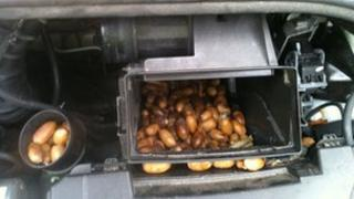 The acorns stashed in the air pipe of the broken-down car