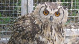 The sanctuary has 250 birds and animals including owls, meerkats chipmunks and wallabies