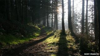 Granner Wood in Powys