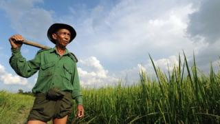 Burmese farmer U Thein Hlaing, 62, poses for pictures in his paddy field on the outskirts of Yangon