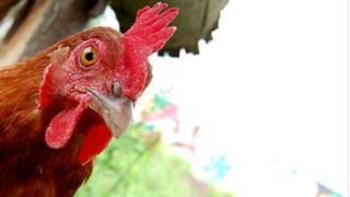 Chicken (generic)