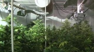 Cannabis factory in Birmingham city centre