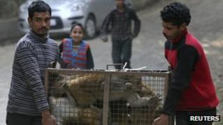 Monkey trappers in Shimla
