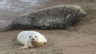 Seals at Donna Nook