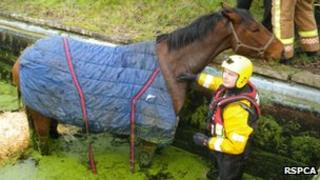 Horse in a swimming pool