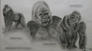 Silverbacks of Durrell, past and present