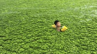 A boy swimming in algae-covered sea