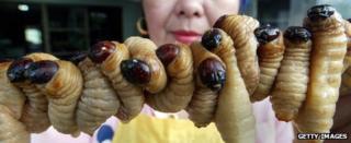 Skewered grubs on sale in Thailand