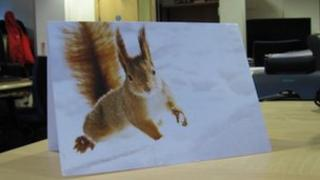 Danny Alexander's Christmas card with red squirrel