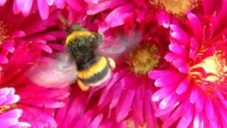 A bee on St Martin's