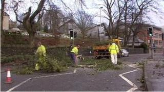Work men clearing trees from Strand Road