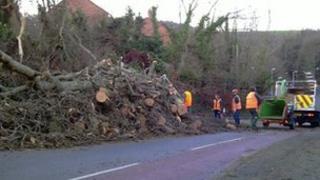 A tree was blown down in Plymstock