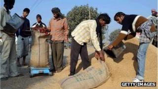 india,grain,food