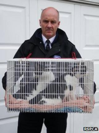 RSPCA inspector Adrian Langley with the two adult cats. Photo: RSPCA