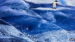 Penguin on sea ice near Ross Sea, Antarctica - undated handout photo from Antarctic Ocean Alliance