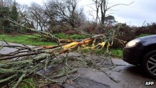 Fallen tree blocks road at Pont l'Abbe, France, 16 Dec 11