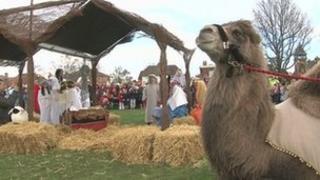 Camel on the village green in Horsmonden