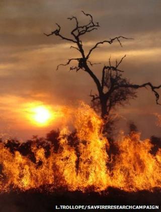 Fire on African savannah (Image: Lynn Trollope/savfireresearchcampaign)