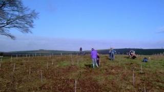 Weymouth tree planting