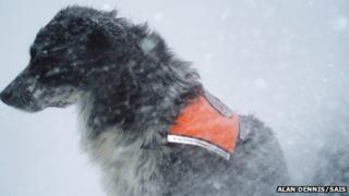 Dog Chester in snow. Pic: Alan Dennis/SAIS