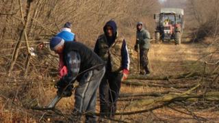 Woodcutting in Rozsaly, Hungary