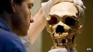 Atapuerca skull