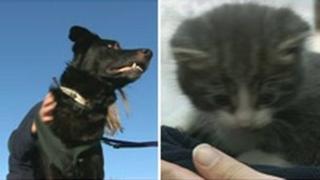 German Shepard-cross Aussie (left) and five-week-old kitten Noel