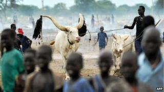 A herdsman from the Nuer tribe stands among his cattle at a cattle-camp, near Nyal, in south Sudan on November 11, 2011