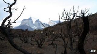 Burnt vegetation in Torres del Paine Park on 31 December 2011