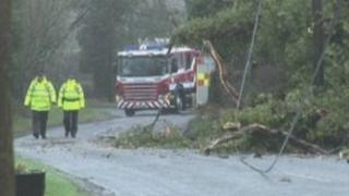 Trees and debris bring power lines down