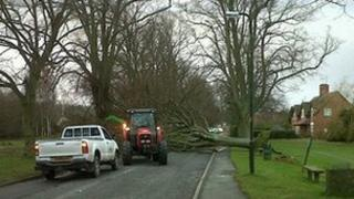 Fallen tree outside Colwall Primary