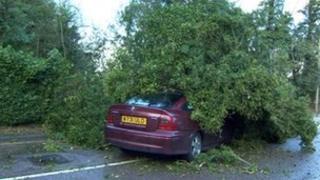 Fallen tree on vehicle