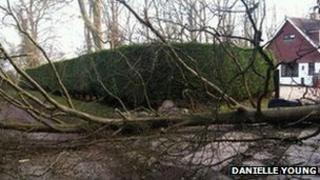 Fallen tree in Headley, Surrey