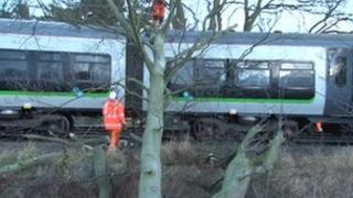 Tree on train