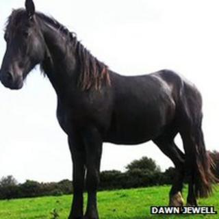 Dawn Jewell's stallion before he was killed