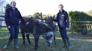 Sheryl Carre and Becky Martin with two donkeys