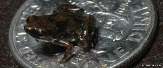 Frog on coin