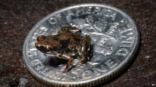 Tiny frog on a small US dime coin