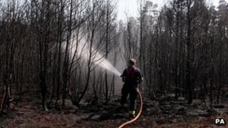 A fireman hoses down charred trees in Swinley Forest.