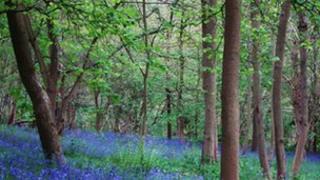 Croft Wood