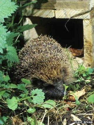 """Hedgehog house"""