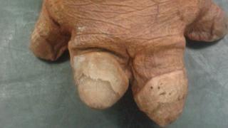 Hippo's foot