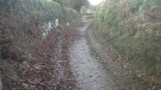 Leaves rotting on a country road in Conwy