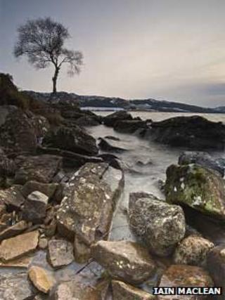 A tree at Loch Duntealchaig. Pic: Iain Maclean
