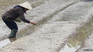 Farmer throwing rice seeds on to land